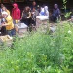 Bienen Sommerfest am Lehrbienenzentrum Hohenstein