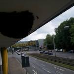 Bienenschwarm Hardeck Bochum