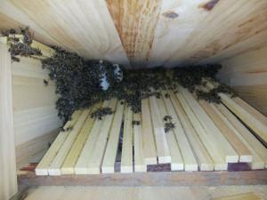 Quer geteilter Brutraum in der Bienenkiste