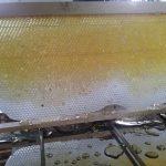 Wabenbock ohne Honigsumpfgefahr