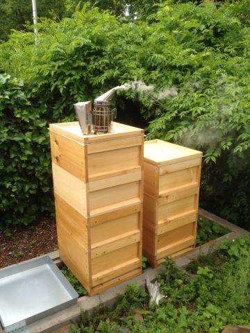 Bienenbeute auf Bienencampingplatz