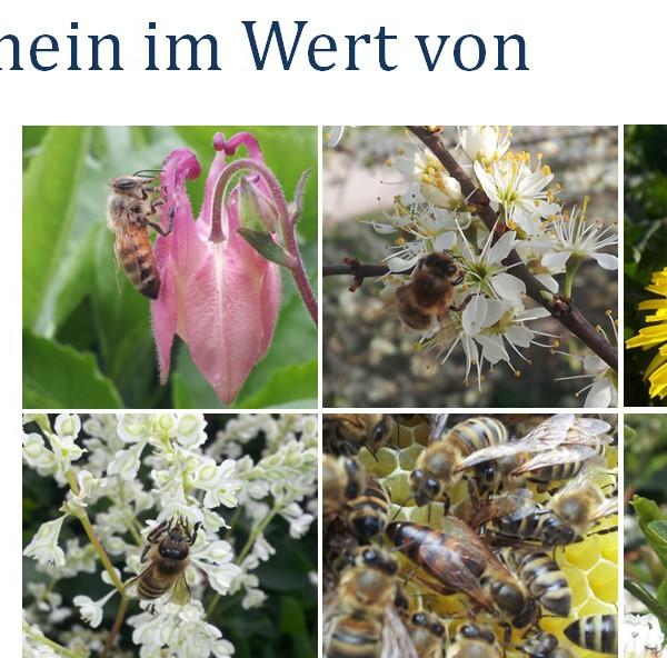 Freie Auswahl im Sortiment des Bienenhirten