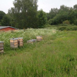 Bienencampingplatz in der Natur und doch stadtnah