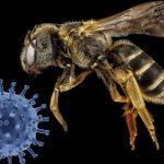 Corona erreicht erstes Bienenvolk